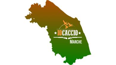 Photo of Marche, Autorizzato il Prelievo in Deroga per Storno e Piccione