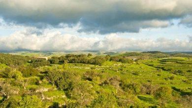 Photo of Sicilia nuova legge sulla caccia in via d'approvazione