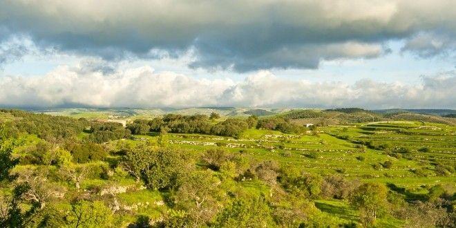 Sicilia nuova legge sulla caccia