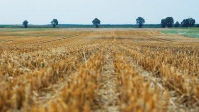 Photo of L'agricoltura è la più grande minaccia per la biodiversità