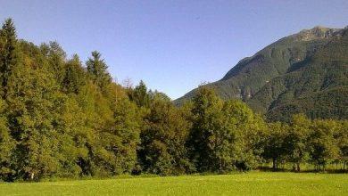 Photo of Federcaccia ricorre al TAR contro il VAS e il PFR del Friuli