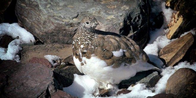 Piemonte nuovo legge sulla caccia