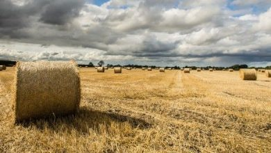 Photo of Berlato, proposta di legge per ripristinare naturalità del territorio agricolo