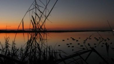"""Photo of La """"Presunta"""" mattanza sul delta del Po di Striscia"""
