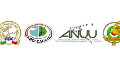 Photo of Associazioni Venatorie scrivono a Renzi e Galletti e presentano ricorso