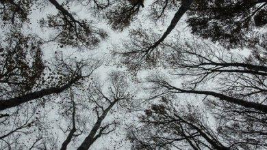 Photo of Termina la stagione venatoria e gli anticaccia danno i numeri