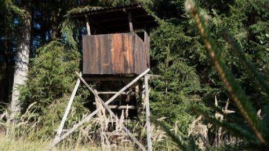 Photo of Trentino, sì alla modifica della legge sulla caccia
