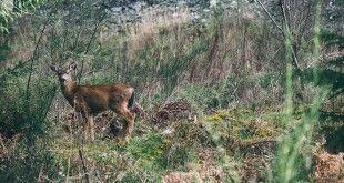 Caccia e Biodiversità in Europa: una coesistenza necessaria