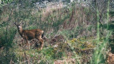 Photo of Gorizia, un convegno su caccia e biodiversità