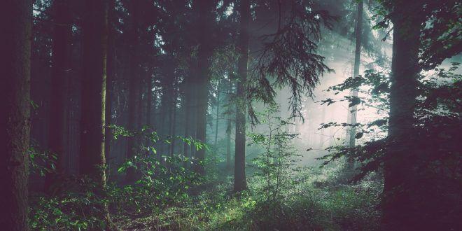 Wilderness acquista Area Wilderness