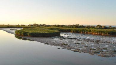 Photo of Veneto, il Consiglio approva la mozione contro il Parco Nazionale del delta del Po