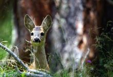 Photo of Trentino-Alto Adige, il Consiglio dei Ministri ripristina e rafforza le competenze provinciali in materia di caccia