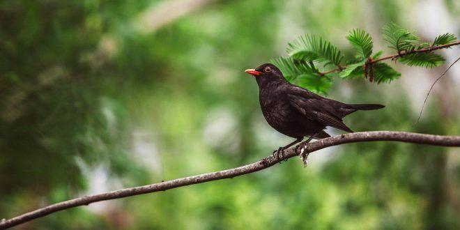Preapertura caccia lazio vietato la caccia a 13 specie