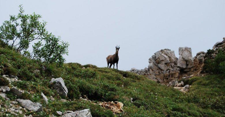 Photo of Camoscia e Mocette