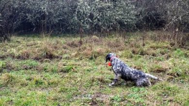 Photo of Fu così che un cane divenne il Mio Cane ed una razza divenne la Mia Razza