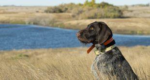 La tecnologia a caccia: il punto di vista di un giovane cacciatore