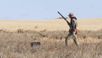 Photo of Vittime della caccia, a fine della stagione puntuali arrivano polemiche e falsità