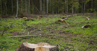 """Wilderness Italia: """"La politica all'assalto dei boschi!"""""""