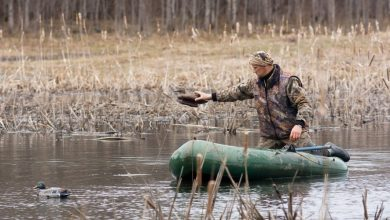 Guida sulla caccia alle anatre utilizzo richiami vivi acquatici