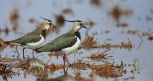 Sospendere la caccia a 7 specie? La FIdC replica alla LIPU
