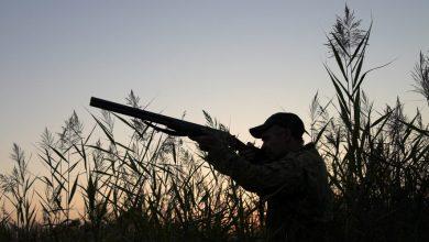 Photo of Piemonte, il Consiglio dei Ministri impugna la nuova legge regionale sulla caccia