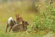 Photo of Sicilia, il TAR sospende la caccia a Coniglio, Moriglione e Pavoncella