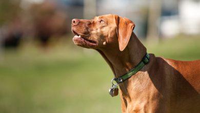 Photo of Vacanze con il cane da caccia: come scegliere la giusta meta