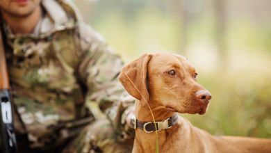 Photo of Il cane è il miglior amico del… cacciatore!