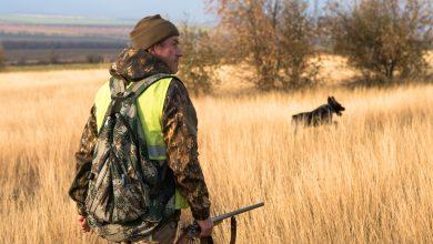 Photo of Marche, il TAR sospende la preapertura della caccia