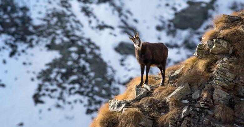 Photo of A Camosci nel posto più selvaggio della valle