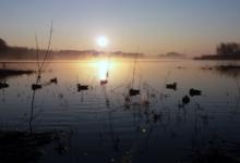 caccia anatre fiume
