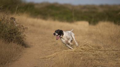 Photo of Addestramento cani in Fase 2, ecco le Regioni dov'è consentito