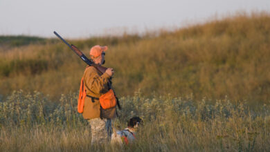 Photo of Piemonte, approvate le modifiche alla legge sulla caccia. Ecco cosa cambia