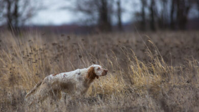 Photo of L'apertura della stagione di caccia secondo me
