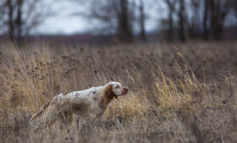 apertura stagione caccia